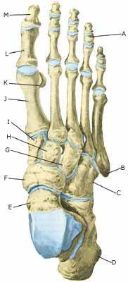knoglebrud i foden
