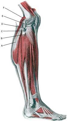 forstrækning af ledbånd i knæ